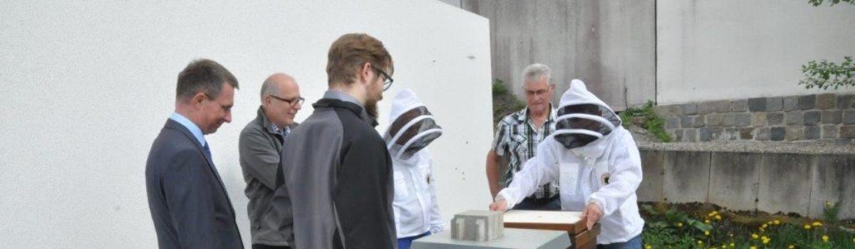 Beesharing Projekt mit den Stadtwerken Amberg