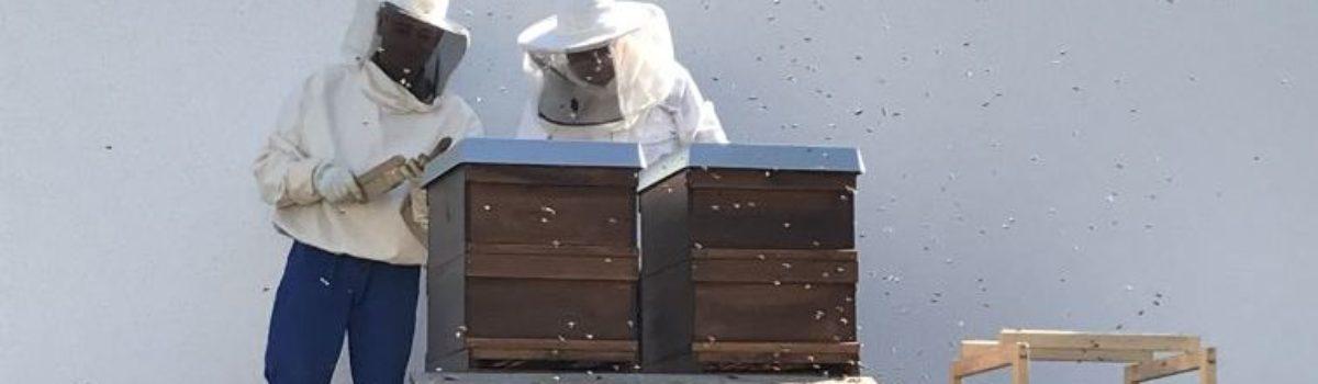 Neues vom Beesharing Projekt mit den Stadtwerken Amberg