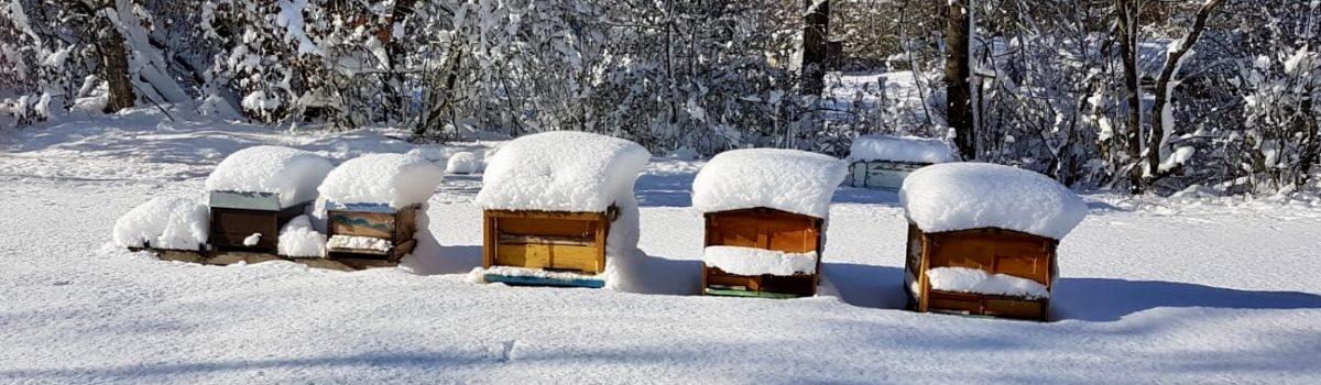 Der Bienenzuchtverein Amberg e.V. wünscht euch frohe Festtage und ein glückliches Neues Jahr 2020