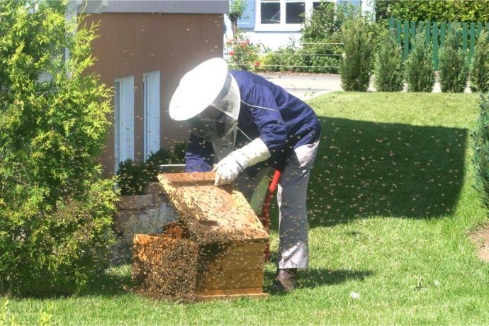 Bienenanmeldung