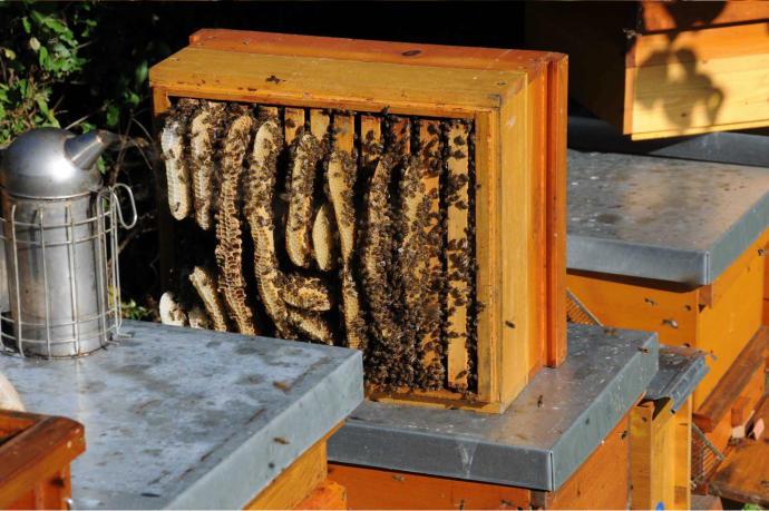 Bienenwohnung
